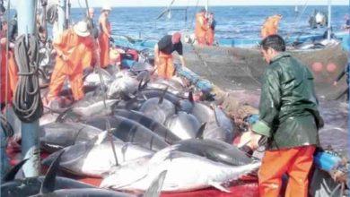 صورة سنة 2020 : 5 رخص جديدة لصيد التن الاحمر
