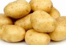 صورة اتحاد الفلاحين يدعو منتجي البطاطا إلى المساهمة في المخزون التعديلي