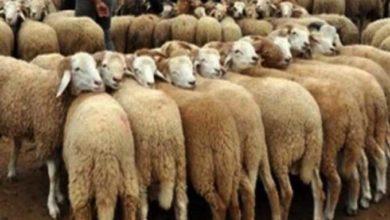 صورة منوبة : جلسة عمل حول تثمين جلود الاضاحي