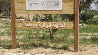 صورة الحديقة الوطنية بوهدمة:  رمزا لثروات التنوع البيولوجي