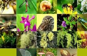 صورة حماية التنوع البيولوجي حماية لمستقبل الإنسان
