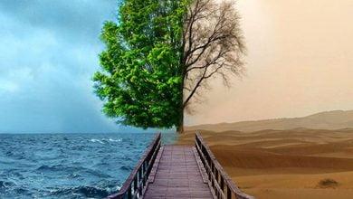 صورة تأثيرات تغير المناخ على الأشجار