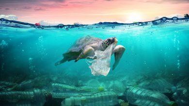 صورة دراسة : نفايات البلاستيك تغزو المحيطات وتقتل الحياة البحرية