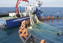 صورة فائض في الميزان التجاري للصيد البحري وتربية الأحياء المائيّة