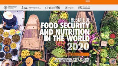 صورة الفاو : 690 مليون جائع … ارتفاع حصيلة الجياع في العالم