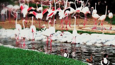 صورة ثروة مهملة ومهددة بالانقراض : تونس موطن للعديد من الأنواع الفريدة من الحيوانات والنباتات