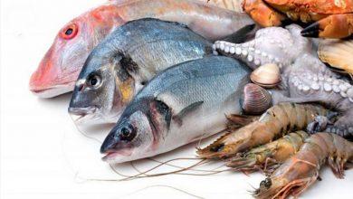 صورة تسجيل فائض بـ6 ,202 م.د في الميزان التّجاري  للصّيد البحري وتربية الأحياء المائيّة إلى موفّى نوفمبر 2020