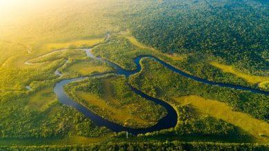 """صورة غابات الأمازون البرازيلية تباع بشكل غير قانوني عبر موقع """"فيسبوك"""""""