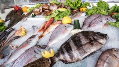 Photo de La Tunisie collabore avec l'Albanie et la Turquie en vue de mettre en place un cadre juridique harmonisé sur la pêche en Méditerranée