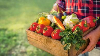 صورة صورة اليوم: كيف نحمي امننا الغذائي؟