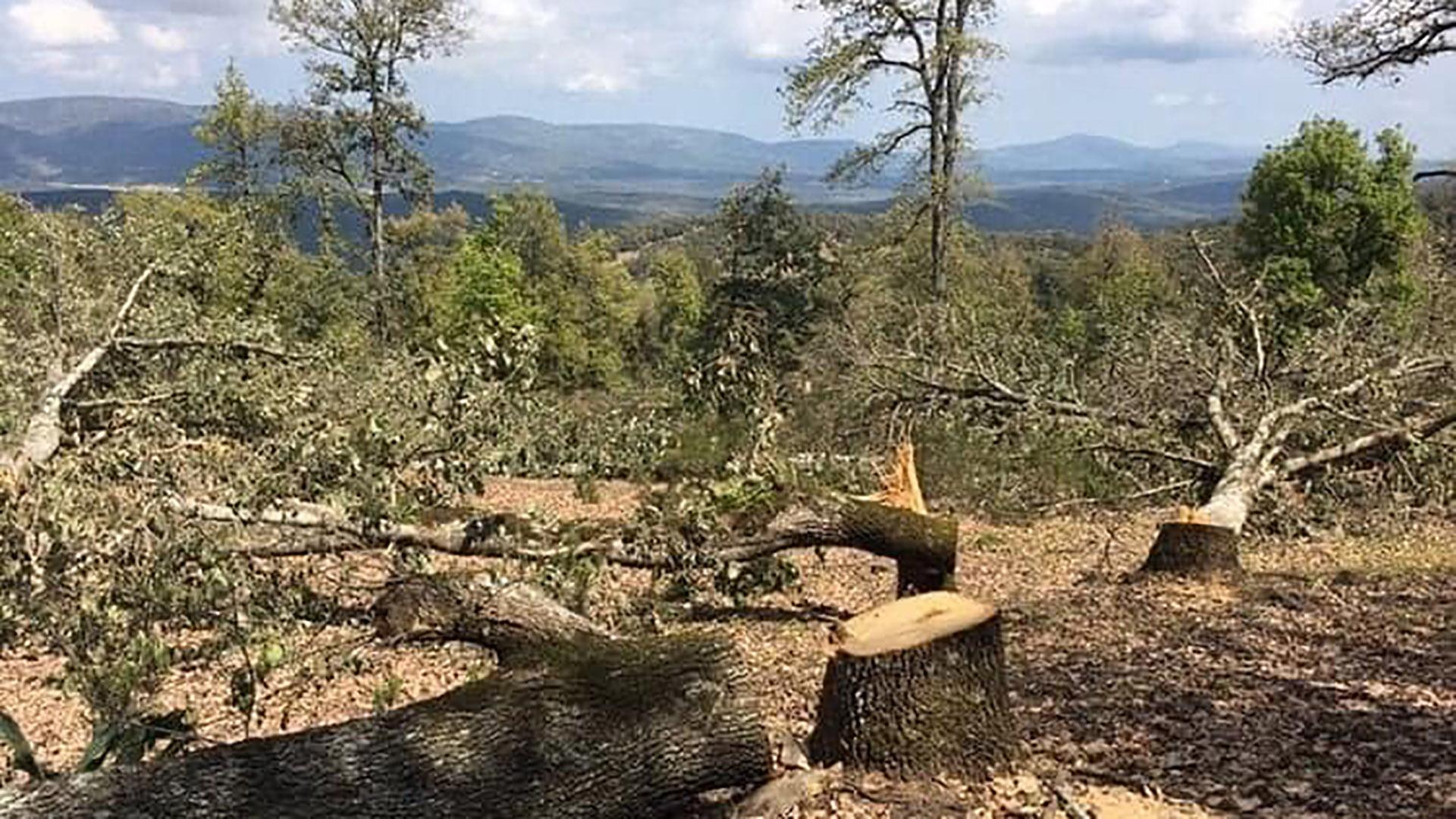 صورة اللجنة العلمية والفنية تقيم الاثار السلبية لقطع الاشجار