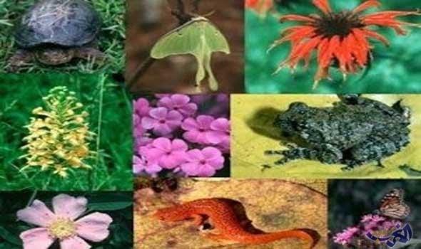 صورة التغيرات المناخية وتداعياتها على البيئة مئات النباتات والكائنات تُفقد واختلال في المنظومة الإيكولوجية
