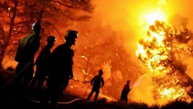 صورة 37 حريق متعمد أضرّ بالغابات في الجزائر في شهر واحد