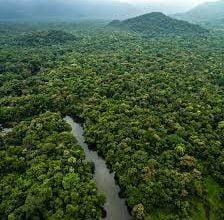 صورة غابات الأمازون المطيرة قد «تغيّر المناخ للأسوأ» وترفع «درجة حرارة الغلاف الجوي للأرض»